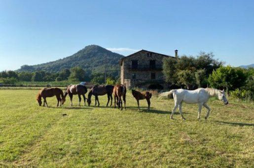 Escapada amb Cavalls Vall d'Hostoles